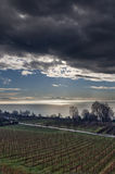 Vineyard close to Meersburg, Bodensee, Germany. Vineyard close to Meersburg at Bodensee (Lake Constance), Germany Stock Photography