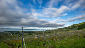 Vineyard and Clouds Stock Photo