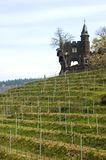 Vineyard Cochem Royalty Free Stock Images