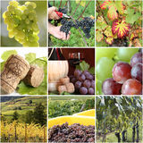 Vineyard collage Royalty Free Stock Image