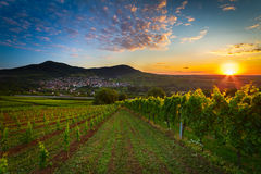 Vineyard with colorful sunrise in Pfalz, Germany. Vineyard with colorful sunrise in Pfalz in Germany Stock Photo