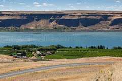 Vineyard on the Columbia River Royalty Free Stock Photo