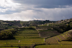 Vineyard Contryside. Rainy Clouds Over Vineyard Contryside in Slovenia Stock Photography