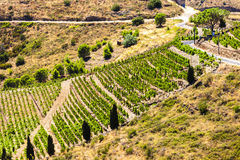 Vineyard on Cote Vermeille. Near Port-Vendres, Languedoc-Roussillon, France Royalty Free Stock Images