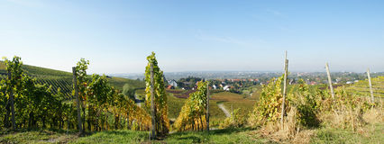 Vineyard in countryside. Wide angle scenic view of vineyard in countryside Royalty Free Stock Images
