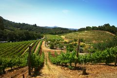 Vineyard in countryside Royalty Free Stock Photos