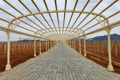 Corridor in Vineyard Royalty Free Stock Image