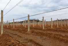 Vineyard in countryside Stock Photography