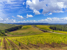 Vineyard countryside in Tuscany, Italy. Rolling hills in sunny Tuscan countryside with vineyards in the foreground Royalty Free Stock Photography