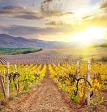 Vineyard in Crimea Stock Photo