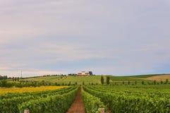 Vineyard in Croatia Stock Image