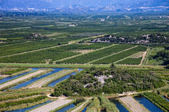 Vineyard in Croatia Royalty Free Stock Images