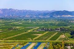 Vineyard in Croatia. View of a vineyard in Dalmatia, Croatia royalty free stock photo