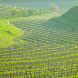 Vineyard, Czech Republic Royalty Free Stock Images