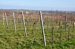 Vineyard, Czech Republic, Europe Royalty Free Stock Photos