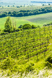 Vineyard, Czech Republic Royalty Free Stock Photography