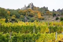 Vineyard with Dürnstein castle ruin Royalty Free Stock Photos