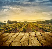 Vineyard design Royalty Free Stock Photography