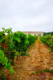 Vineyard in Domaine de Maguelone near Montpellier, South France,. Red wine grape plantation Royalty Free Stock Images
