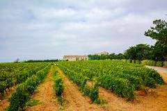 Vineyard in Domaine de Maguelone near Montpellier, South France,. Red wine grape plantation Royalty Free Stock Image