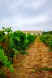 Vineyard in Domaine de Maguelone near Montpellier, South France,. Red wine grape plantation Stock Image