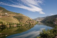 Vineyard on Douro river. Scenic view of vineyards lining banks of Douro river, Peso da Regua region, Iberian Peninsula, Portugal Royalty Free Stock Photography