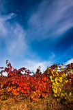 Vineyard with dramatic skies Stock Photos