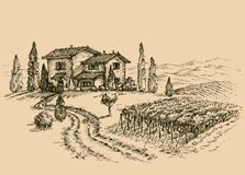 Vineyard drawing Stock Photography