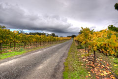 Vineyard Driveway Stock Photo