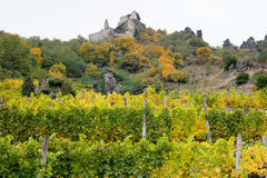 Vineyard with Dürnstein castle ruin Royalty Free Stock Photos