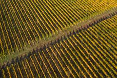 Vineyard drone shot, aerial view from above stock images