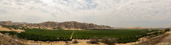 Vineyard in a dry California valley stock photo