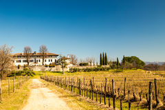 Vineyard in early spring Stock Images