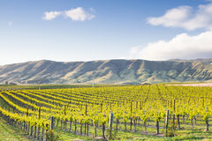 Vineyard East Royalty Free Stock Photos