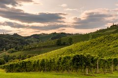 Vineyard in the evening along the south Styrian vine route in Au Stock Photography