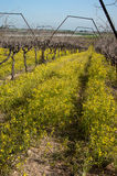 Vineyard in fall and signs of spring, portrait Royalty Free Stock Photos