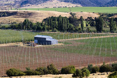 Vineyard Farm. A vineyard and farm buildings with irrigation system royalty free stock photography