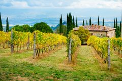 Vineyard and farm in Chianti. Overlooking Montaio and Valdarno in autumn, Tuscany, Italy stock image