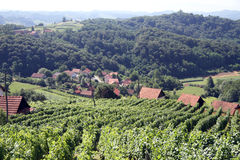Vineyard and farm houses Royalty Free Stock Image