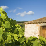 Vineyard with farmhouse Royalty Free Stock Photography