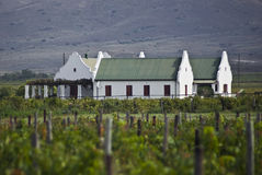 Vineyard Farmhouse Buildings. Vineyard farmhouse in it's distinctive Cape Dutch style architecture. View from the middle of the vineyard. Nestled in the Eilandia stock images