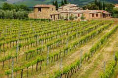 Vineyard with a farmhouse in Montalcino, Val d `Orcia, Tuscany, I. Taly. Montalcino is famous for its Brunello di Montalcino wine royalty free stock photo
