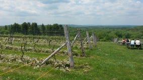 Vineyard fence. Fence at Vineyard Stock Photos