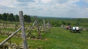 Vineyard Fence. Fence at Vineyard Stock Photo