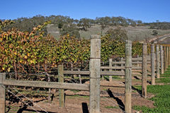 Vineyard Fences Royalty Free Stock Photo