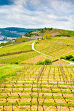 Vineyard field Royalty Free Stock Photos