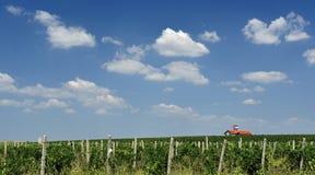 Vineyard field Stock Image