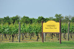 Vineyard field Royalty Free Stock Photography