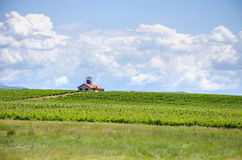 Vineyard field and house with observer top Stock Images
