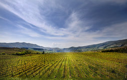 Vineyard field in Macedonia Royalty Free Stock Images